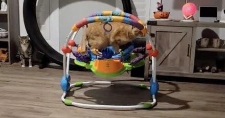 Le chat saute sur le transat de bébé : 4,5 millions de personnes sont fascinées par ce qu'il fait (vidéo)