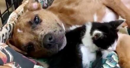 Abandonnés et mal en point tous les deux, ce chaton et ce chiot s'aident mutuellement à guérir (Vidéo)