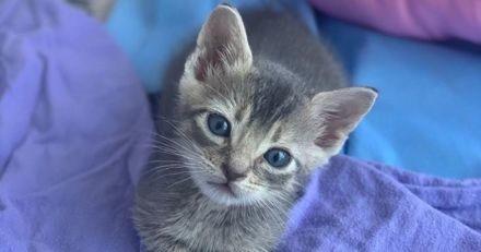Cet AirBnb hors du commun est le paradis sur Terre pour tous les amoureux des chats