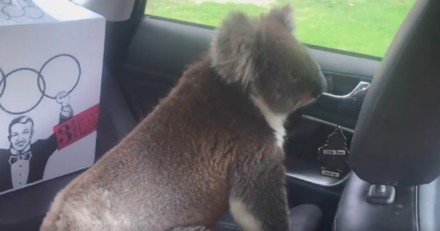 Il quitte sa voiture quelques minutes, quand il revient il se retrouve nez à nez avec un visiteur inattendu !