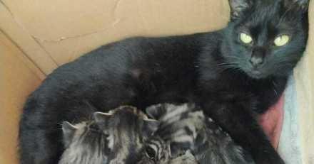 Ils réservent un chaton dans un refuge et finalement se rétractent pour une raison qui fend le cœur