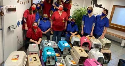 Les vétérinaires d'une clinique décident de travailler gratuitement toute une journée