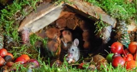 Il trouve une famille de souris dans son jardin et leur construit un village miniature