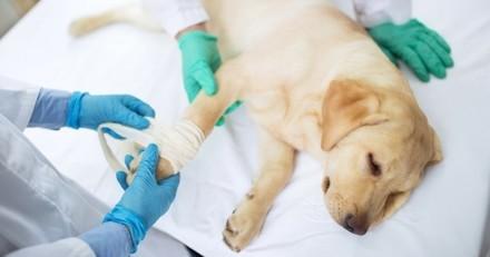 Incroyable : disparue dans le bush australien, cette chienne réapparaît 4 ans plus tard