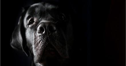 Ces chiens ont sauvé leur maîtresse qui a fait un AVC (Vidéo)
