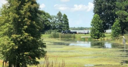 Son Pitbull se baigne dans un lac : quelque chose bouge dans l'eau et elle pousse un hurlement