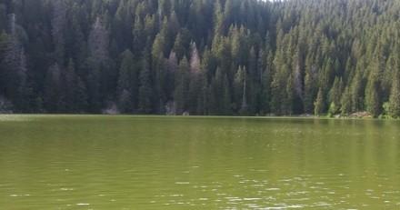 Sortie au lac avec son chien : 5 heures après, la situation vire au drame…