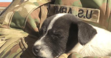 Un militaire entend des gémissements dans un carton : ce qu'il va découvrir va changer le cours de sa mission