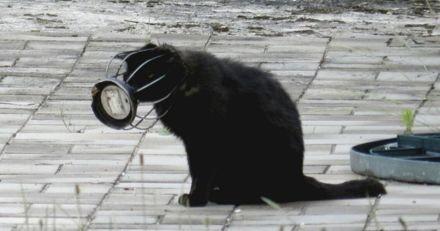 Elle croise un chat avec la tête coincée dans une grille : 2 mois plus tard, tout bascule !