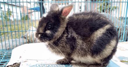 Sur Facebook, une ONG découvre un lapin particulièrement rare et réalise l'impensable