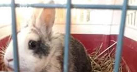 Lapin abandonné devant une animalerie : un mot très cruel est accroché à la cage