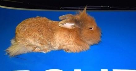Le beau geste de policiers pour un lapin égaré et transi de froid