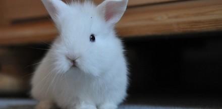 Offrir un lapin à Pâques ? Mauvaise idée !