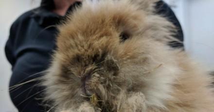 Il abandonne son lapin dans un refuge, en le voyant les bénévoles sont sous le choc