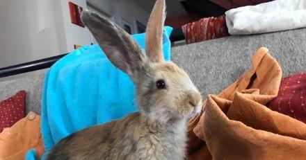 Cette association veut faire adopter un lapin : vous n'avez jamais vu une annonce pareille !