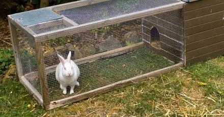 Alerte : un serial killeur de lapins sévit en Bretagne