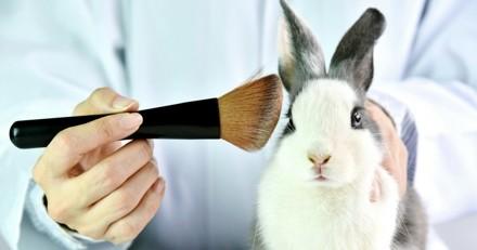 Bientôt une interdiction mondiale de l'expérimentation animale dans les cosmétiques ?