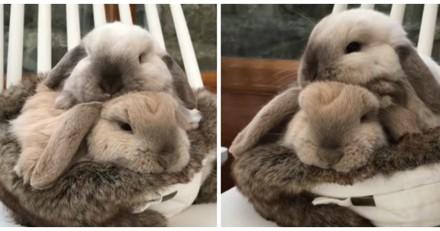 Besoin d'un moment de douceur ? Ces deux lapins qui se font des câlins sont là pour ça (Vidéo du jour)