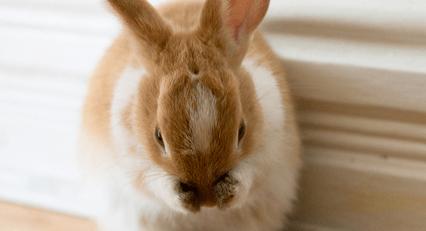 Les 9 principaux facteurs de stress chez le lapin