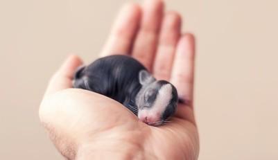 30 jours, 30 photos pour immortaliser la métamorphose d'un lapin…