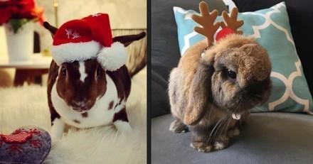 10 lapins trop mignons déjà prêts pour Noël !
