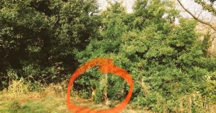Il voit son chien s'approcher d'un buisson et quand il comprend il explose de rire
