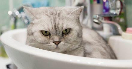 5 astuces pour donner un bain à votre chat sans recevoir de coups de griffes !