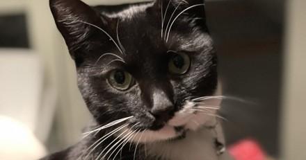 Son chat a quelque chose dans le collier, il regarde et fait une découverte qui va changer son quotidien