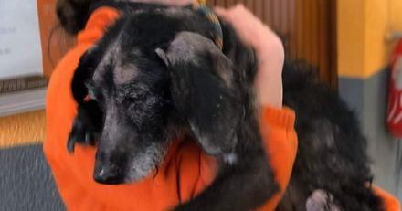 Maltraitance animale : la SPA livre un témoignage poignant et renouvelle une fois encore son engagement