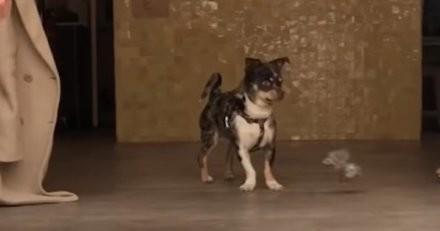 Volé à Paris, son chien est retrouvé à 1000 km dans le sud de la France grâce aux réseaux sociaux (vidéo)