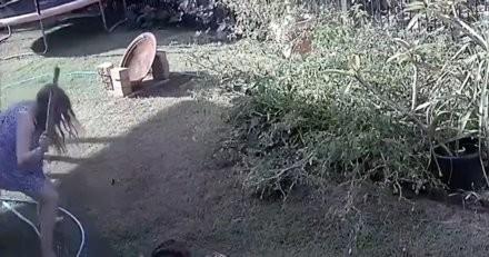 Son chiot joue et s'approche d'un buisson : quelques secondes plus tard une ombre se jette sur lui !