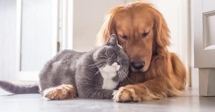 Et vous, combien seriez-vous prêt à dépenser pour sauver la vie de votre chat ou de votre chien ?