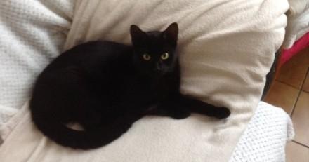 Internet réclame justice pour Léo, un chat noir tué par balle en pleine rue