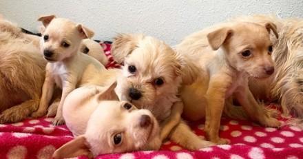 Ces deux chiennes élèvent leurs petits ensemble