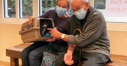 Ils perdent leur chat sur une île paradisiaque : un appel 1 semaine plus tard les laisse sans voix