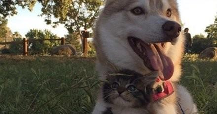 Dans la rue le chaton est mourant, l'énorme chien Husky s'approche de lui et ce qu'il fait est bouleversant