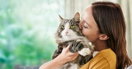 Allergique aux chats ? Purina lance LiveClear®, le 1er et le seul aliment pour chat qui réduit les allergènes !