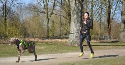 6 conseils d'une « bête de course » pour bien commencer le canicross avec son chien