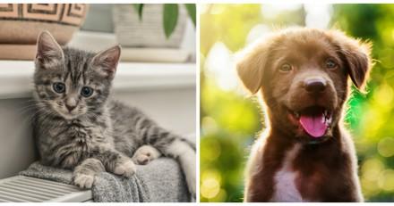 Une entreprise vous propose de louer des chatons et des chiots le temps d'une journée