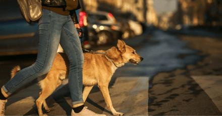 Coronavirus : le confinement n'autorise pas à sortir son chien dans le sud de l'Australie
