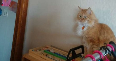 Son chat se coince dans un endroit totalement improbable (Vidéo)