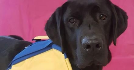 LOL est le premier chien d'assistance judiciaire en France