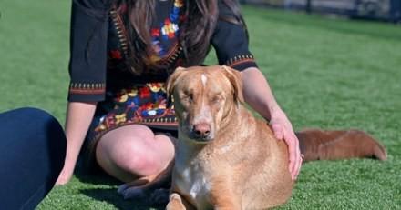 Ce chien perd ses yeux à cause de la maltraitance de ses maîtres, son histoire émeut toute la planète