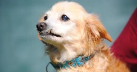 La SPA trouve une chienne âgée dans la rue à plusieurs reprises : ses maîtres prennent la pire des décisions