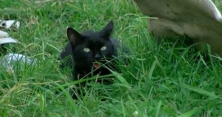 Tous les jours, son chat la réveille avec un animal mort, mais cette fois c'était bien pire