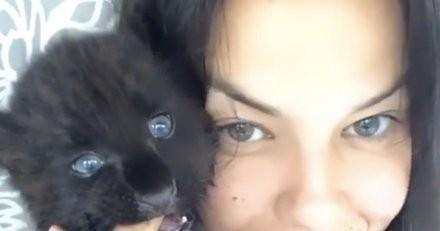 Une femme décide d'adopter un étrange chaton, toute sa famille panique en le voyant arriver (vidéo)