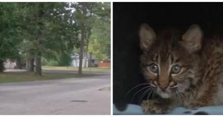En voiture, elle sauve un chaton en danger. De retour chez elle, elle comprend son énorme erreur