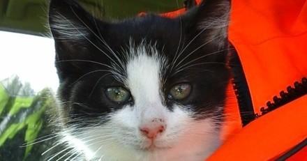 Un chaton jeté depuis une voiture sur l'autoroute sauvé par des ouvriers