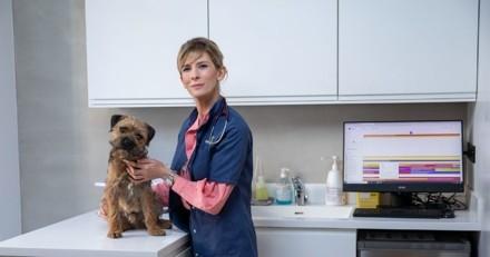 SOS Animaux sur 6ter : une opération très risquée sur un chien victime d'une torsion de l'estomac