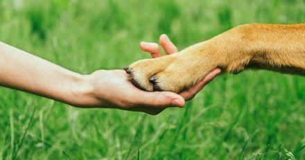 Journaliste en reportage dans un refuge : en quelques secondes, un chien lui bondit dessus et...